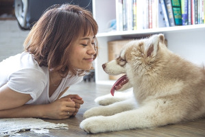 Air purifier to limit allergies due to pets